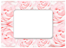 The rose frame, blooming flowers vintage background, pastel and soft card Royalty Free Stock Image
