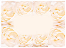 The rose frame, blooming flowers vintage background, pastel and soft card Royalty Free Stock Photos