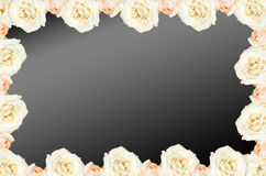 Rose. Frame horizontal. Cream roses in a bunch on a bleck background.Background abstract made of roses Stock Image