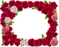 Rose frame isolate on white. Background Stock Image