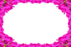 Rose Frame isolated on white Royalty Free Stock Image