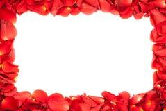 A rose frame. A red rose petals frame Royalty Free Stock Photos