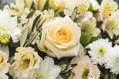 Rose and freesia Stock Photography