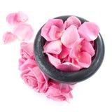 Rose fresche in mortaio Fotografia Stock