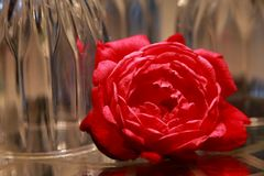 Rose in Front of Upside Down Wine Glasses Stock Photo