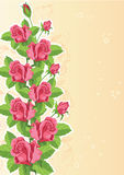 Rose funny card Royalty Free Stock Image