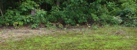 Rose, fuori di, foglie, albero, fine su, erba, erba secca, albero decomposto, ceppo fotografia stock libera da diritti