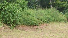 Rose, fuori di, foglie, albero, fine su, erba, erba secca, albero decomposto, ceppo immagine stock libera da diritti