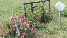 Rose, fuori di, foglie, albero, fine su, erba, erba secca, albero decomposto, ceppo immagini stock libere da diritti