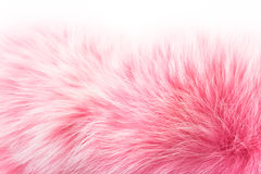 Rose fur on white. Colored rose fur of polar fox isolated on a white background Royalty Free Stock Photos