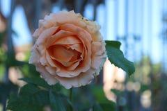 Rose Garden της Ρώμης Στοκ Εικόνα