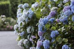 Rose Garden του Πόρτλαντ Στοκ Εικόνα