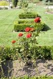 Rose garden Stock Photo