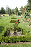 Rose garden. The beautiful Woodland Park Rose Garden in summer. Seattle, Washington, USA Royalty Free Stock Images