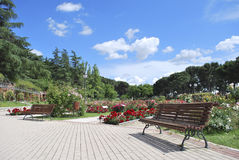 The Rose Garden. La Rosaleda Park, Madrid Stock Photography