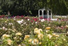Rose Garden Στοκ φωτογραφία με δικαίωμα ελεύθερης χρήσης