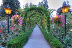 Rose garden arches and path. Beautiful garden arches and path inside the historic butchart gardens (over 100 years in bloom), vancouver island, british columbia stock photography