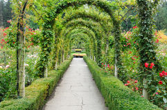 Rose garden arches and path. Beautiful garden arches and path inside the historic butchart gardens (over 100 years in bloom), vancouver island, british columbia Royalty Free Stock Photos