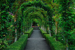 Rose garden arches and path. Beautiful rose garden arches and path in vancouver island, british columbia, canada royalty free stock images