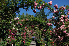 Rose garden arches and path royalty free stock image