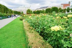 Rose garden backgrounds. Defocused distant people and buildings shallow depth of field royalty free stock photography