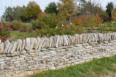 Rose garden behind a stone wall Stock Photography