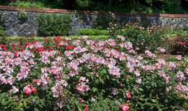 Rose Garden. At Biltmore House in Asheville, NC Stock Image