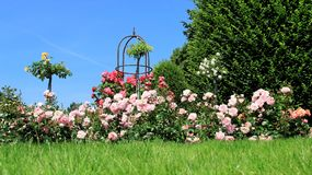 Rose garden with blue Ske. Colorful rose garden with blue Sky in summer on Baltic sea coast Stock Image