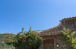 Rose garden. Rose bush in subtropical garden Mallorca, Spain stock photography