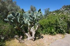 Rose garden. Rose bush in subtropical garden Mallorca, Spain stock photos