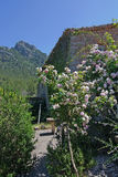 Rose garden. Rose bush in subtropical garden Mallorca, Spain stock photo