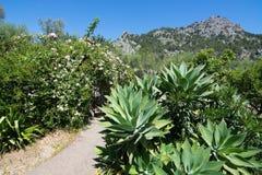 Rose garden. Rose bush and succulent plants in subtropical garden Mallorca, Spain stock images