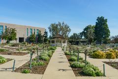 Rose garden of Cal Poly Pomona. At Los Angeles County, California royalty free stock image