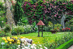 Rose Garden in the castle of Eltville am Rhein, Germany Royalty Free Stock Image