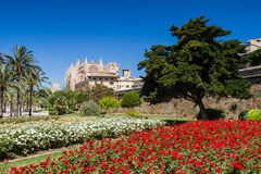 Rose garden at the cathedral of Mallorca Royalty Free Stock Images