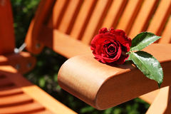 Rose and garden chair Royalty Free Stock Image