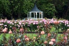 Rose Garden di Palmerston NZL del nord Immagini Stock