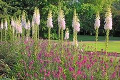 Rose Garden em Hyde Park, Londres Fotografia de Stock