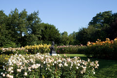Rose Garden en Regent's Park Imagenes de archivo