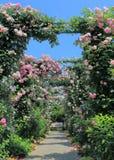 Rose garden flower arcade. In Yokohama Japan Royalty Free Stock Photo