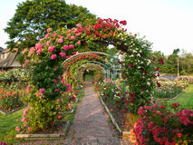 Rose garden. Formal rose garden with arching trellises Royalty Free Stock Photo