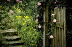 Rose Garden. The rose garden with full of beautiful rose Royalty Free Stock Photo