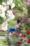Rose garden with girl sitting on a bench Royalty Free Stock Image