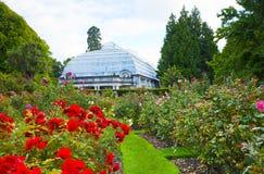 Rose Garden Hagley Park Christchurch Nueva Zelanda fotos de archivo libres de regalías