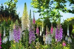 Rose Garden a Hyde Park, Londra Fotografia Stock Libera da Diritti