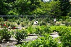 Rose Garden im Hokkaido-Hochschulbotanischen Garten Lizenzfreies Stockfoto