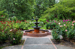 Rose Garden. International Test Rose Garden is one of the most popular places in Portland, OR Royalty Free Stock Photo