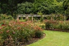 Rose Garden,Invercargill Royalty Free Stock Photography