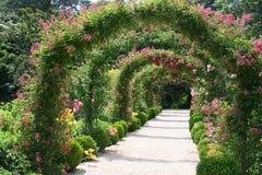 Rose Garden Landscape royalty free stock photo