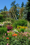 Rose garden landscaping Royalty Free Stock Photography